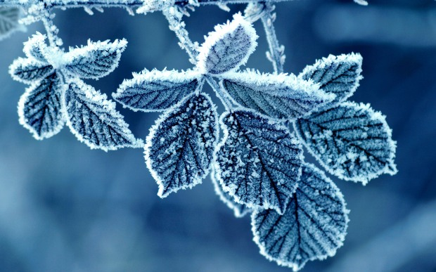 cold_winter_morning_frost_leaves-2560x1600